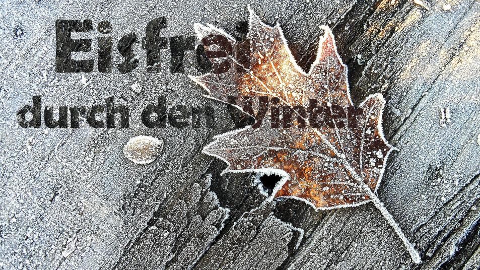Pond-Tipp: Safely through the Winter