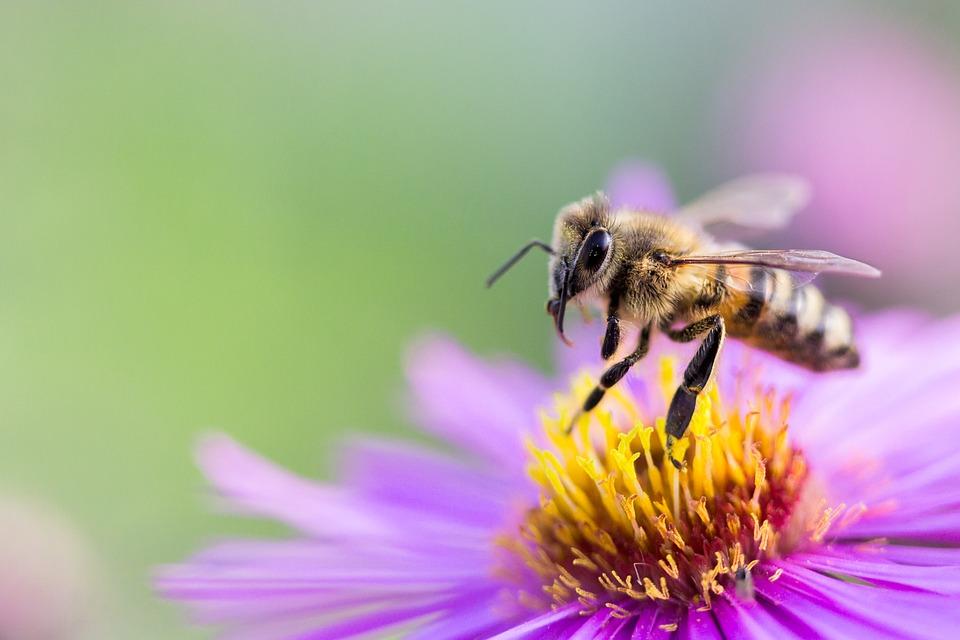 Titelbild Insektenbild