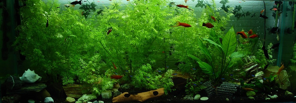 Aquarium Einrichten Archive Blog Wiltec De